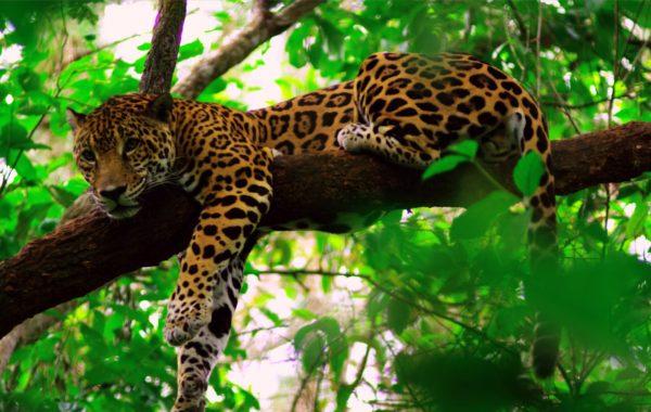 Belize & Tikal Experience