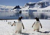 antarctic-4