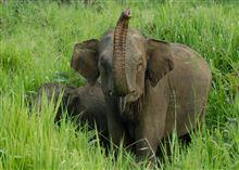 thumb-srilanka-elephant