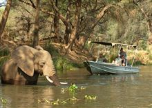 thumb-zambia-river-elephant