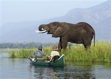 thumb-zimbabwe-elephant