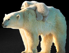 thumb_arctic_footer_bears