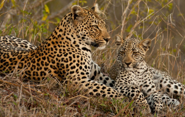Splendors Of Southern Africa