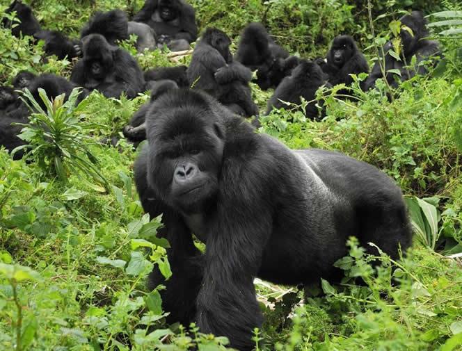 A Uganda & Rwanda Adventure