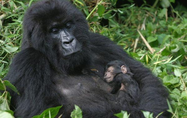 A Classic Rwanda Safari