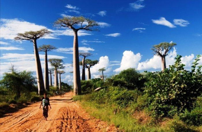 MADAGASCAR BREAKAWAY