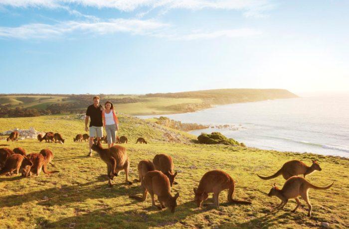 South Australia, Red Centre & Sydney Adventure