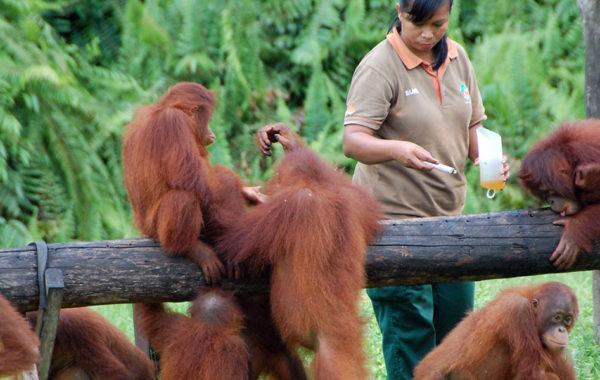 Kalimantan: Orangutan Explorer